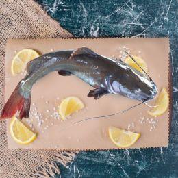 Cá Lăng Đỏ (Sống) 0.8-1.7kg/Con