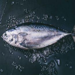 Cá Ngừ Đông Lạnh 0.5kg Up/Con
