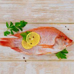 Cá Diêu Hồng (Sống) 0.8-1.0 kg/Con