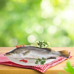 Cá Chẽm 0.8-1.2kg/ Con